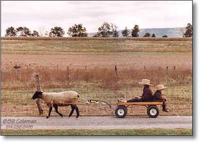 Sheep_cart