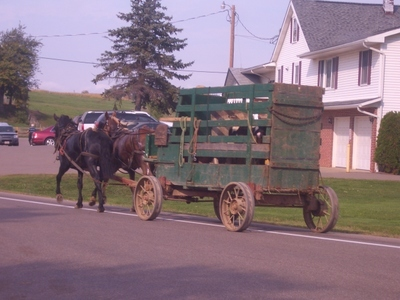 Amish_farm_wagon_ohio