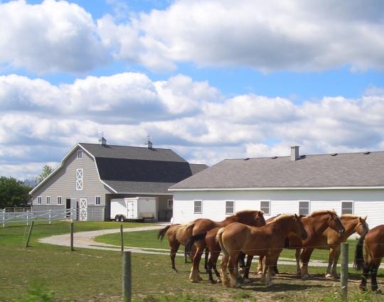 amish barn indiana horses