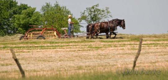 amish-boy-field-work-missouri