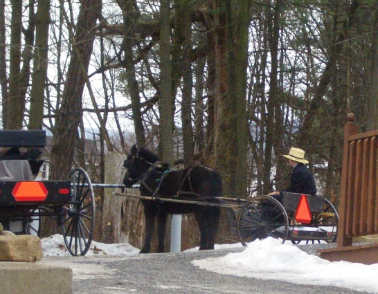 amish boy mifflin county pa