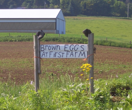 Amish Brown Eggs