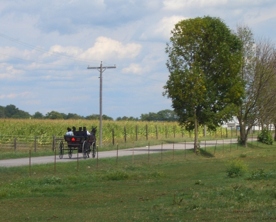 amish buggy allen co indiana