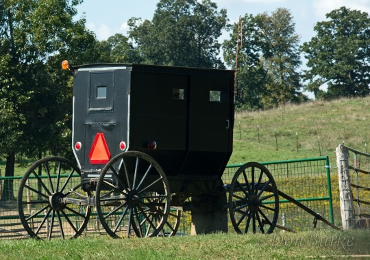 amish-buggy-arkansas