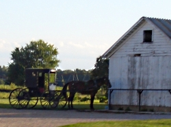 amish-buggy-centreville-mi