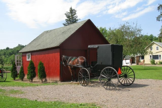Amish Buggy Clyde NY