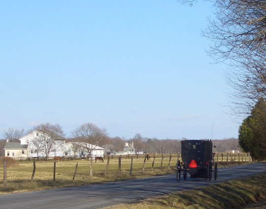 amish buggy dover