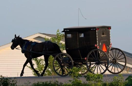 Amish Buggy Jamesport MO