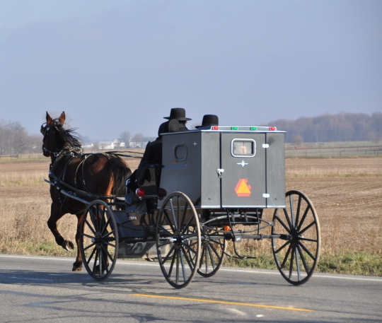 amish-buggy-kid-box