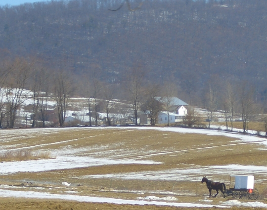 amish buggy snow field