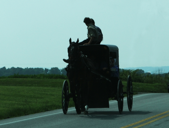 Amish Buggy Top Riders