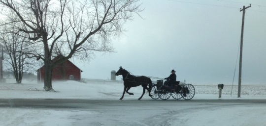 amish-buggy-traveling-adams-co