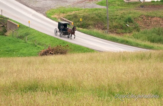 The 10 Biggest Amish Communities (2019)