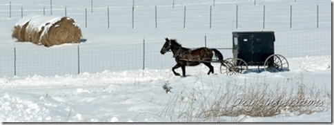 amish-buggy-traveling-through-snow