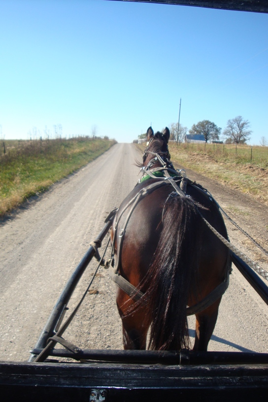 amish buggy view