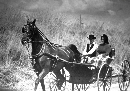 amish carriage vintage
