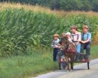 amish children cart