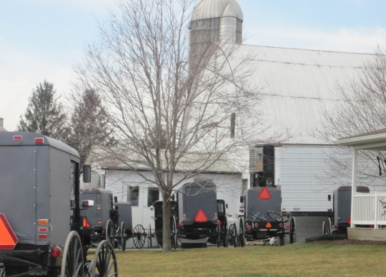 Amish Church Gathering