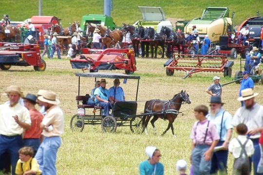 amish-crowd-at-horse-progress-event