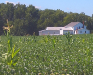 amish farm growing conditions