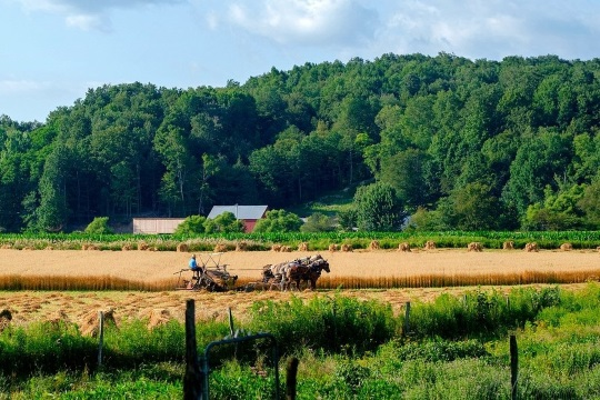 Photos From Western NY Amish Country