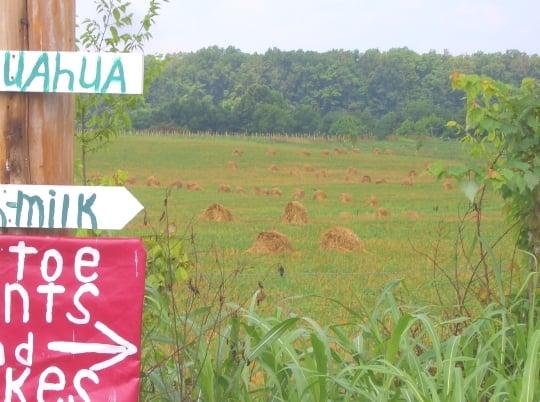 amish field ethridge