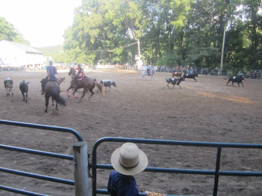Amish Girls Cattle Rodeo