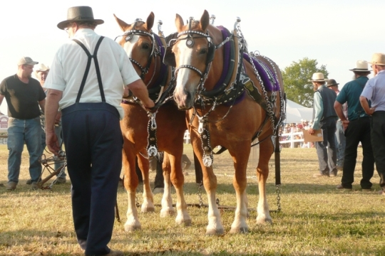Amish Horse Exhibition