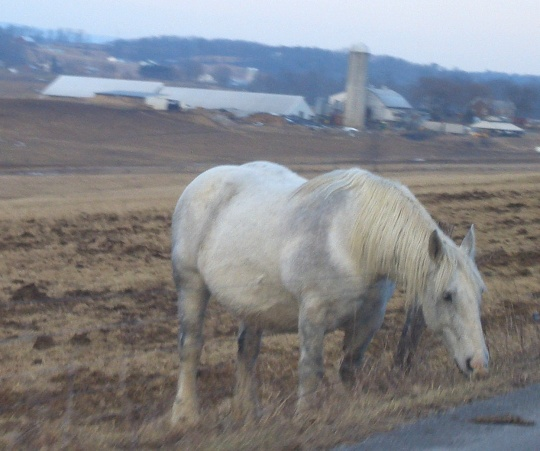 amish horse juniata county