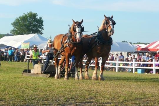 Amish Horse Show