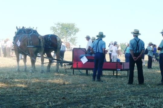 Amish Horse Sled