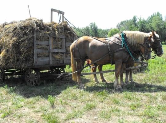 Amish Horse Wagon