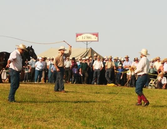 Amish Horse Whip