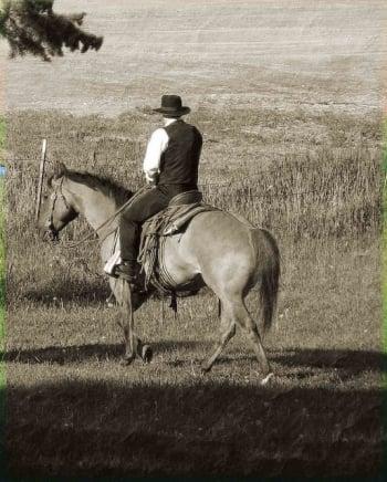 amish horseback montana