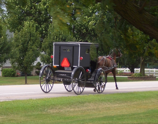 amish indiana buggy