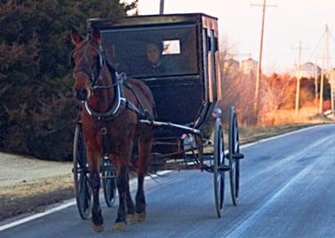 amish kansas buggy