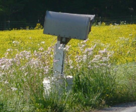 amish mailbox