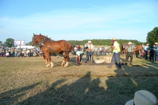Amish Men Horse Show