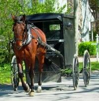 Amish Mennonites Canada