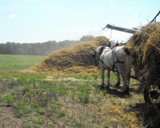 Amish Oat Threshing