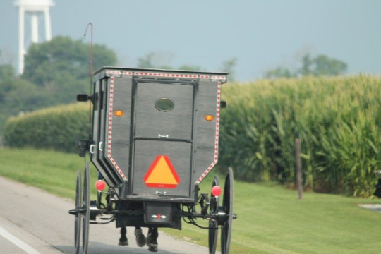 amish-on-road-illinois