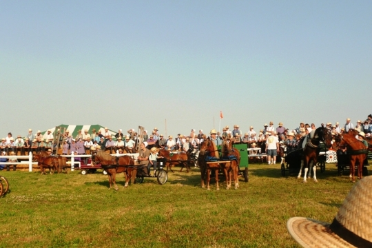 Amish Pony Show