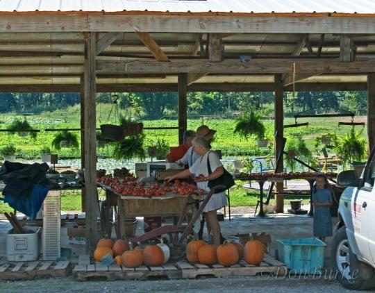 Amish Produce Arkansas