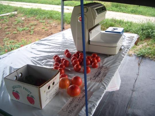 amish produce tomatoes