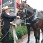 amish ride horses