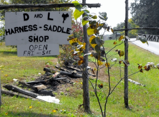 Amish Saddle Harness Tenn