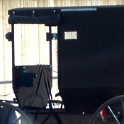amish shooting buggy front