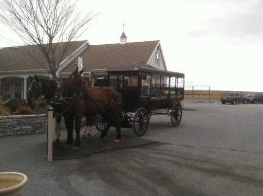 Amish Tourist Buggies