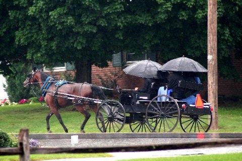amish-umbrellas