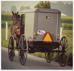 amish-voter-buggy